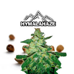 Hymalahaze